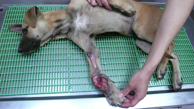 台中市世界联合动物保护协会
